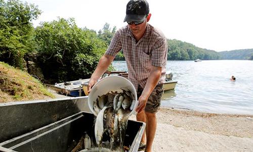 Cá chết được thu vớt trên sông Rhine hôm 6/8. Ảnh: Reuters.