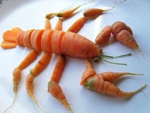 Tôm hùm cà rốt.