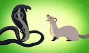 5 loài săn mồi đáng sợ trong tự nhiên