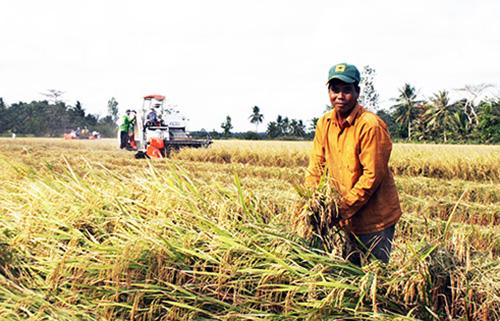 Miền Tây chiếm hơn 50% sản lượng lương thực cả nước và cung ứng hơn 90% lượng gạo xuất khẩu. Ảnh: Cửu Long