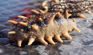 680.000 tấn hải sâm chết do nắng nóng ở Trung Quốc