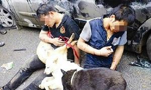 Luật xử phạt kẻ trộm chó như thế nào