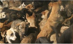 'Cứ yêu chó nhưng đừng phủ nhận quyền ăn thịt chó của người khác'