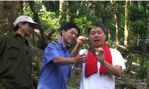 500.000 gốc sâm Ngọc Linh quý trong rừng già Quảng Nam