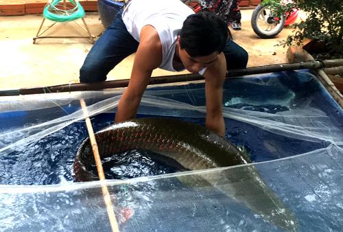 Anh Nam và con cá hải tượng 30 kg bắt được trên sông Vàm Cỏ Đông. Ảnh: Mai Linh