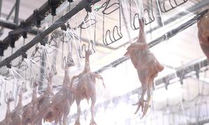 Dây chuyền chế biến thịt gà tự động lớn nhất Việt Nam