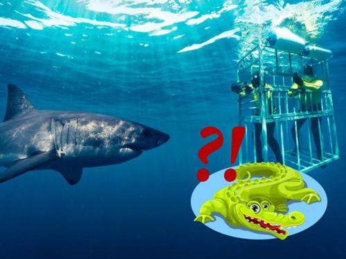 Tại sao chúng ta không thể lặn cùng cá sấu?