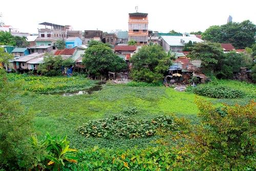 Sông Ngự Hà đoạn qua phường Phú Hòa đang tắc dòng do rác thải. Ảnh: Võ Thạnh