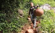 Trèo núi thu hoạch na thu tiền triệu mỗi ngày