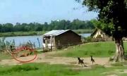 Đôi chó ngăn hổ dữ vào làng tấn công đám trẻ