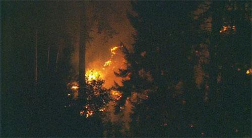 Máy bay bị bốc cháy sau khi lao xuống đảo Ketron, hạt Pierce, Washington. Ảnh: Komonews.