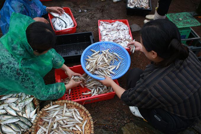 Chợ bến cá nhộn nhịp ở Cửa Lò