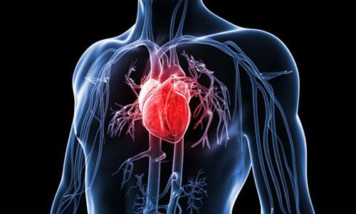 Mô phỏng cấu tạo tim người. Ảnh minh họa.