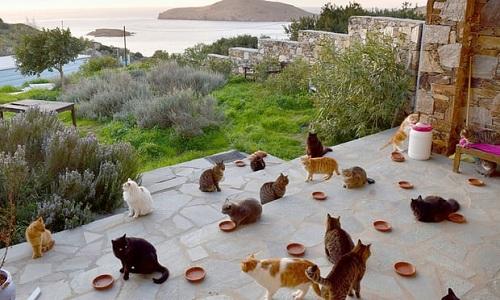 Khu bảo tồn mèo có tầm nhìn trông ra thiên đường thu nhỏ Syros. Ảnh: Facebook.