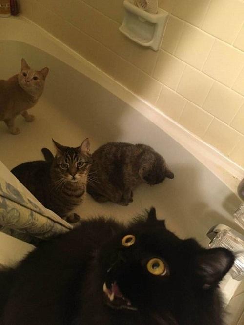 Thảm họa mang tên tắm rửa.
