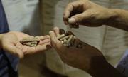 Doanh nghiệp Việt đầu tư sản xuất viên nén năng lượng từ gỗ thải loại