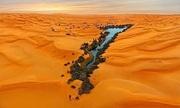 Cứu tinh của động vật di cư giữa biển cát Sahara
