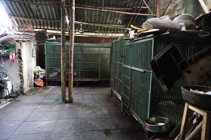 Giải cứu hai con gấu bị nuôi nhốt 18 năm