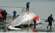 'Người Nhật vẫn ăn thịt cá voi và người Ấn không cấm ta ăn thịt bò'