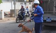 Quận trung tâm Sài Gòn ra quân dẹp chó thả rông