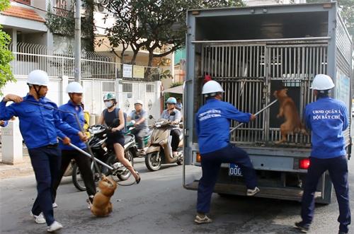 Hai chú chó thả rông bị bắt trên đường Nguyễn Đình Chiểu. Ảnh: Sơn Hòa