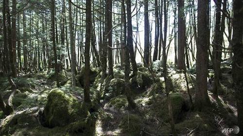 Khu rừng nơi Fujimoto mất tích. Ảnh: AFP.