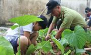 Học sinh Hà Nội trồng cây thay thế mật gấu
