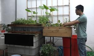 Hệ thống trồng rau, nuôi cá trong nhà giá 20 triệu đồng