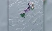 Chim cốc đế nuốt chửng lươn sau trận kịch chiến