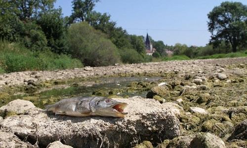 Xác cá và sỏi đá còn sót lại sau khi khúc sông biến mất. Ảnh: AFP.