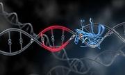 Gene 'xác sống' giúp voi kháng bệnh ung thư