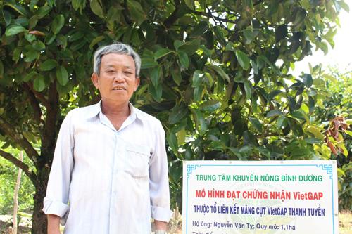 Vườn măng cụt VietGap của ông thu lãi về hàng trăm triệu đồng mỗi năm. Ảnh: Xuân Chinh