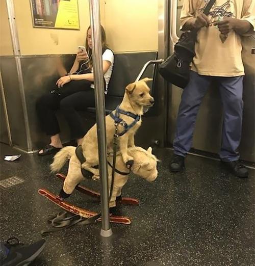 Cún cưng đúng nghĩa.