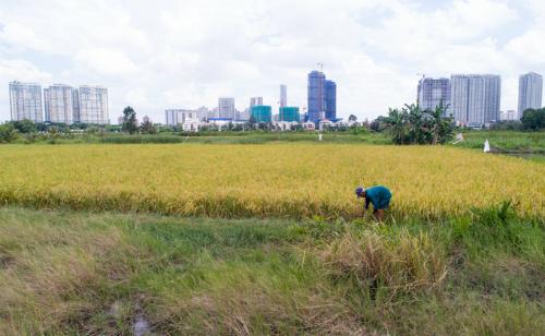 26.000 đất nông nghiệp ở TP HCM được Chính phủ cho phép chuyển đổi mục đích sử dụng. Ảnh: Quỳnh Trần
