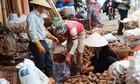 Lâm Đồng chi tiền tỷ làm tem chống hàng giả khoai tây