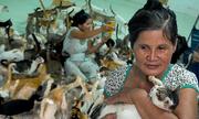 Người phụ nữ hơn 20 năm sống với hàng trăm con mèo