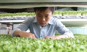 Vườn ươm rau mầm mỗi tháng thu hơn trăm triệu ở TP HCM