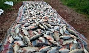 Cá chết hàng loạt gần khu vực bãi rác ở Hà Nội