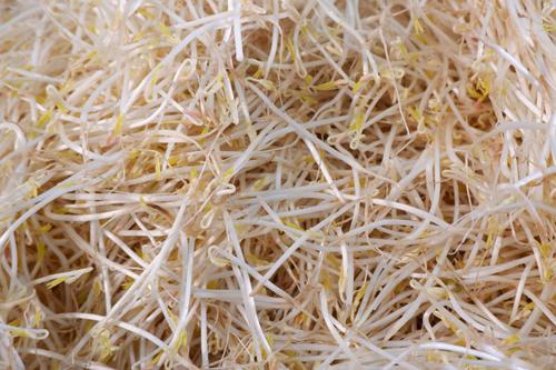 Theo anh Vũ cho, cọng giá sạch không hóa chất thường có màu trắng hơi ngà. Khi ủtheo phương pháp truyền thống, không sử dụng hóa chất thì rễ rất dài. Thân giá sạch chắc, giòn,thon, ít nước, mùi đặc trưng của hạt đậu, nếm thử có vị ngọt thanh nhẹ tương tựhương vị của củ đậu hoặc củ sắn dây. Trong khi giá bỏ hóa chất rễ sẽ ngắn, thân thuôn tròn, khi bẻ ra nhiều nước.