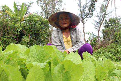 Rau ở làng trồng quanh năm do áp dụng nhiều cách trồng và chăm sóc sáng tạo.