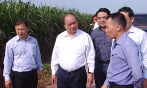 Thủ tướng Nguyễn Xuân Phúc thăm nông trường mía công nghệ cao