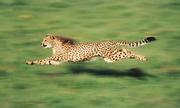 Tìm hiểu những cái nhất trong thế giới động vật