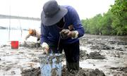 Lội sình đào trùn làm mồi câu cá ở Vũng Tàu
