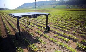 Máy diệt cỏ bằng năng lượng mặt trời