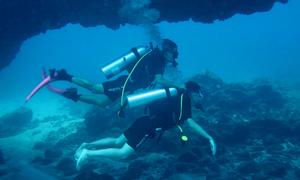 Lặn ngắm vòm đá dung nham núi lửa dưới đáy biển Lý Sơn