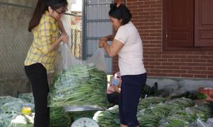 Mướp Nhật và rau an toàn ở Ninh Bình tìm thị trường đầu ra