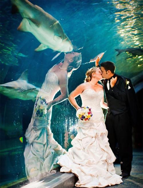 Chị ấy cưới nhầm cá mập rồi.