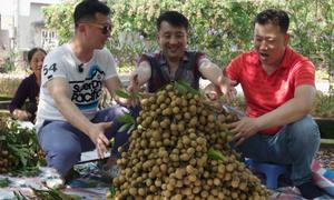 Khách Hàn Quốc thích thú thăm 'thủ phủ' nhãn Hưng Yên