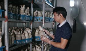 8X chế tạo thành công dây chuyền trồng nấm công nghệ cao ở Vĩnh Phúc