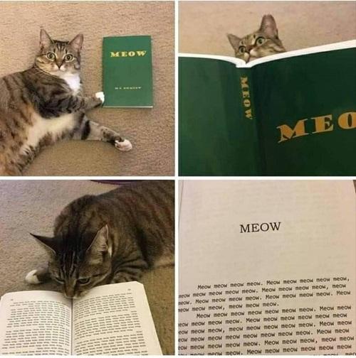 Sách đoạt giải Nobel văn học của mèo.